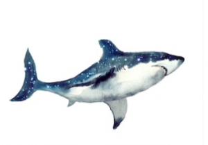 Omega Shark - พันทิป - pantip - รีวิว